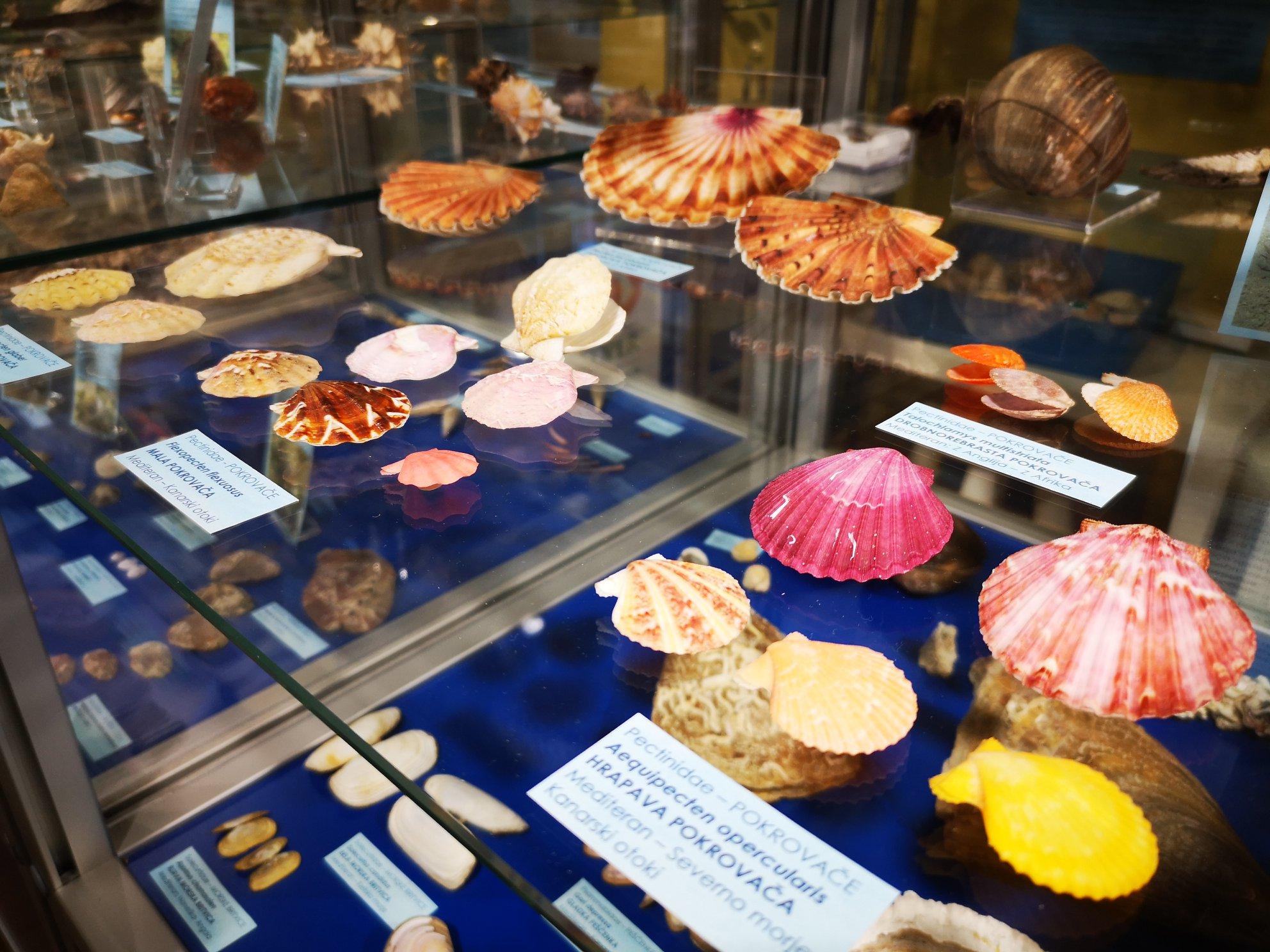 muzej školjk